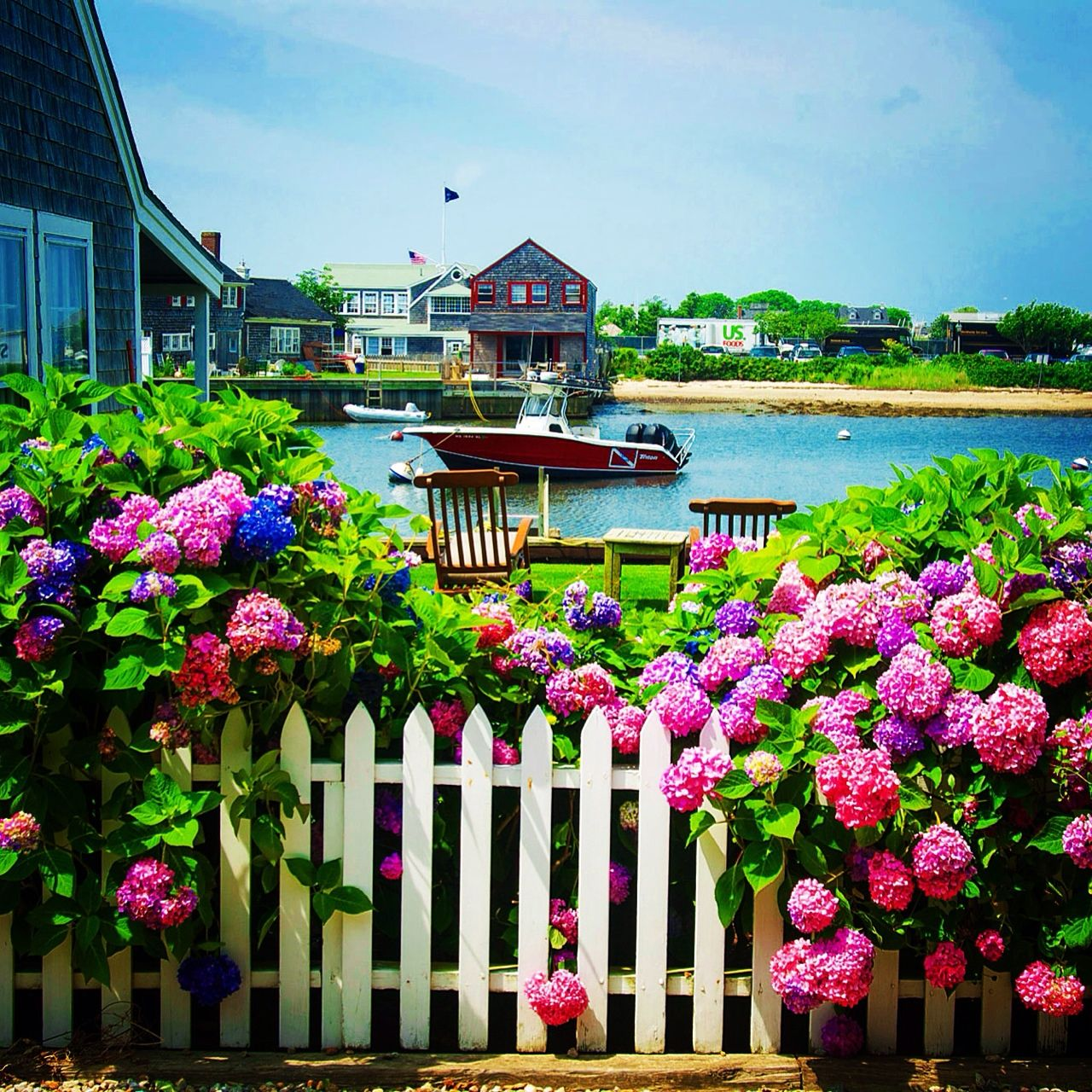 Hydrangeas On Old North Wharf On Nantucket … From My Early