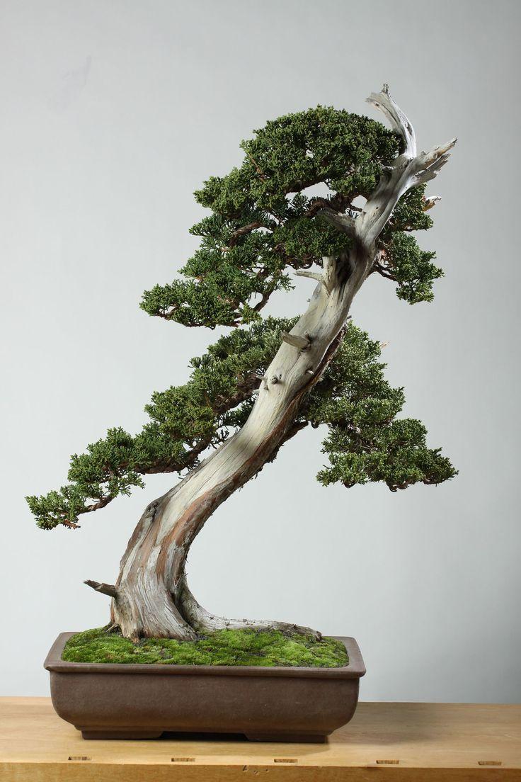 The Slanting Style in Bonsai Indoor bonsai, Indoor