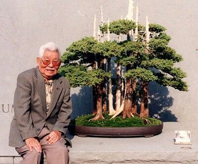 John Naka Decidio Nombrarlo Goshin Cuyo Significado En Japones Es Protector Del Espiritu Informacion Tomada De Www Rut Bonsai Arboles Bonsai Bosque Bonsai