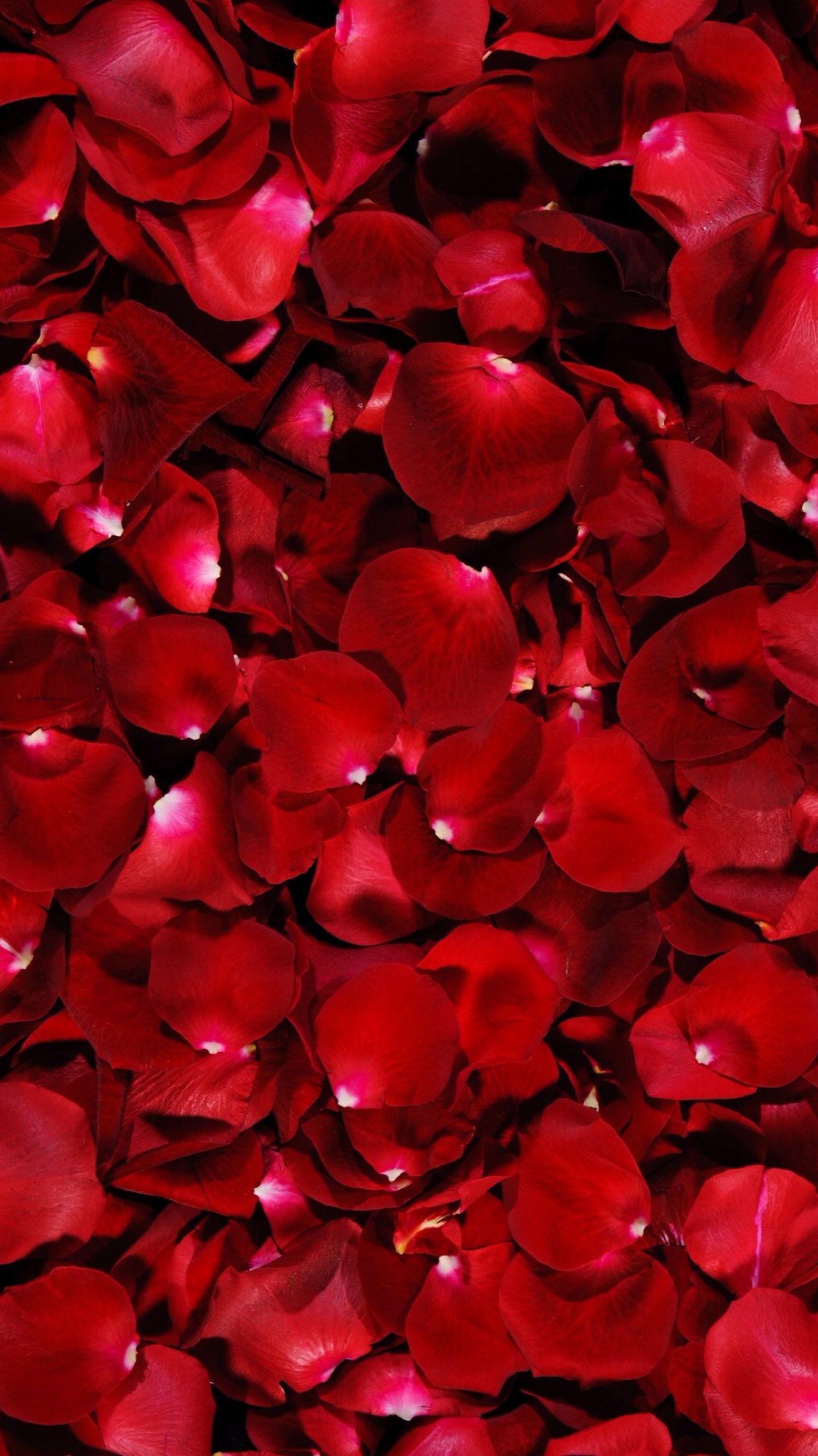Red rose petals wallpaper wallpapers pinterest - Red rose petals wallpaper ...