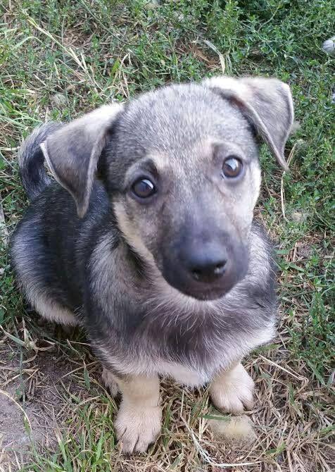 Essen Arcsi 1 Jahr Alter Rude Lieb Verschmust Und Vertraglich Tierschutz Hunde Hunde Tierheim