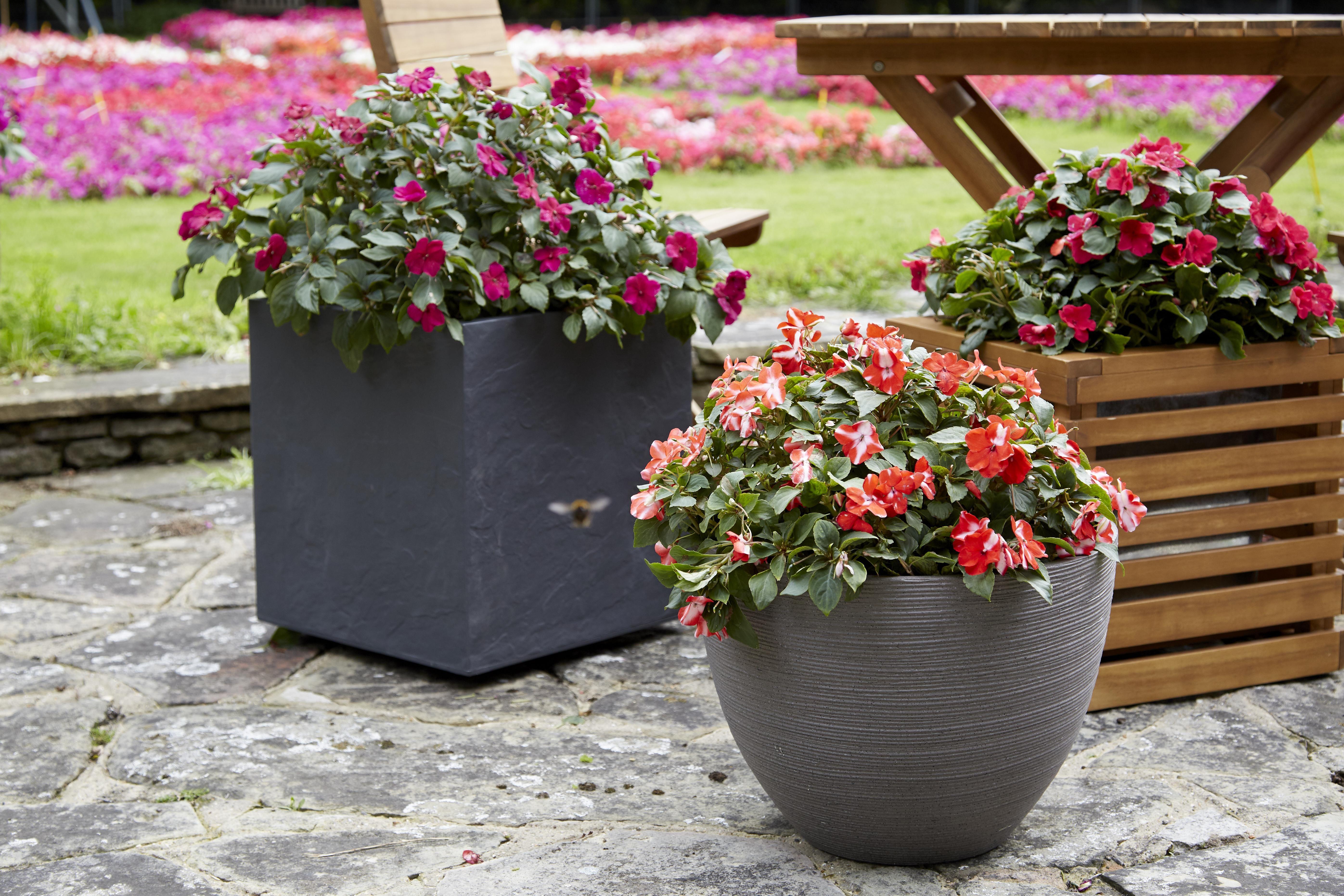 B&q Garden Plants And Bulbs