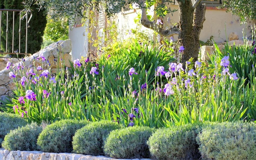Mediterranean style planting with a border of bearded for Irish garden designs
