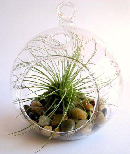 Hanging Glass Air Plant Terrarium Terrarium Plants Pinterest