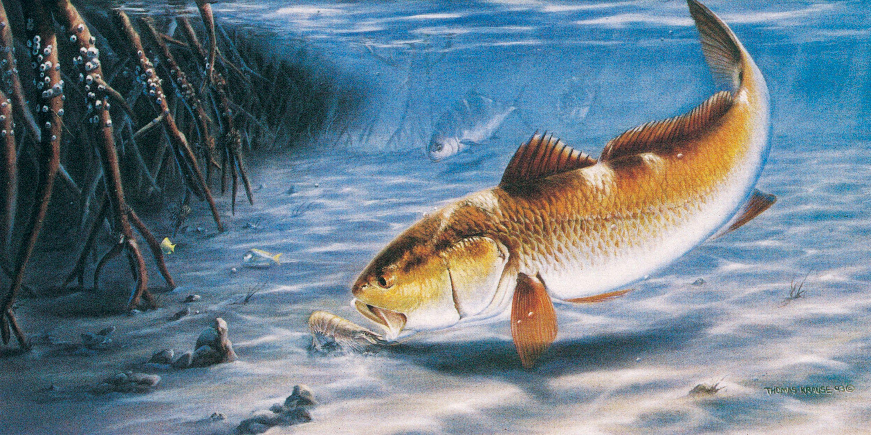 32+ Cool bass fishing wallpapers 4k UHD