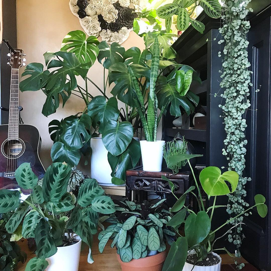 Ig Iridescent Koi Plants Best Indoor Plants Indoor Plants