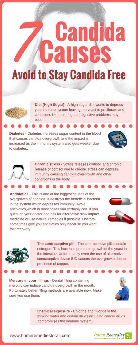 Recetas dieta anti candida species