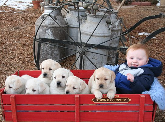 I Want One Sooo Bad The Labs Not The Kid Yellow Lab Puppies Lab Puppies Puppies