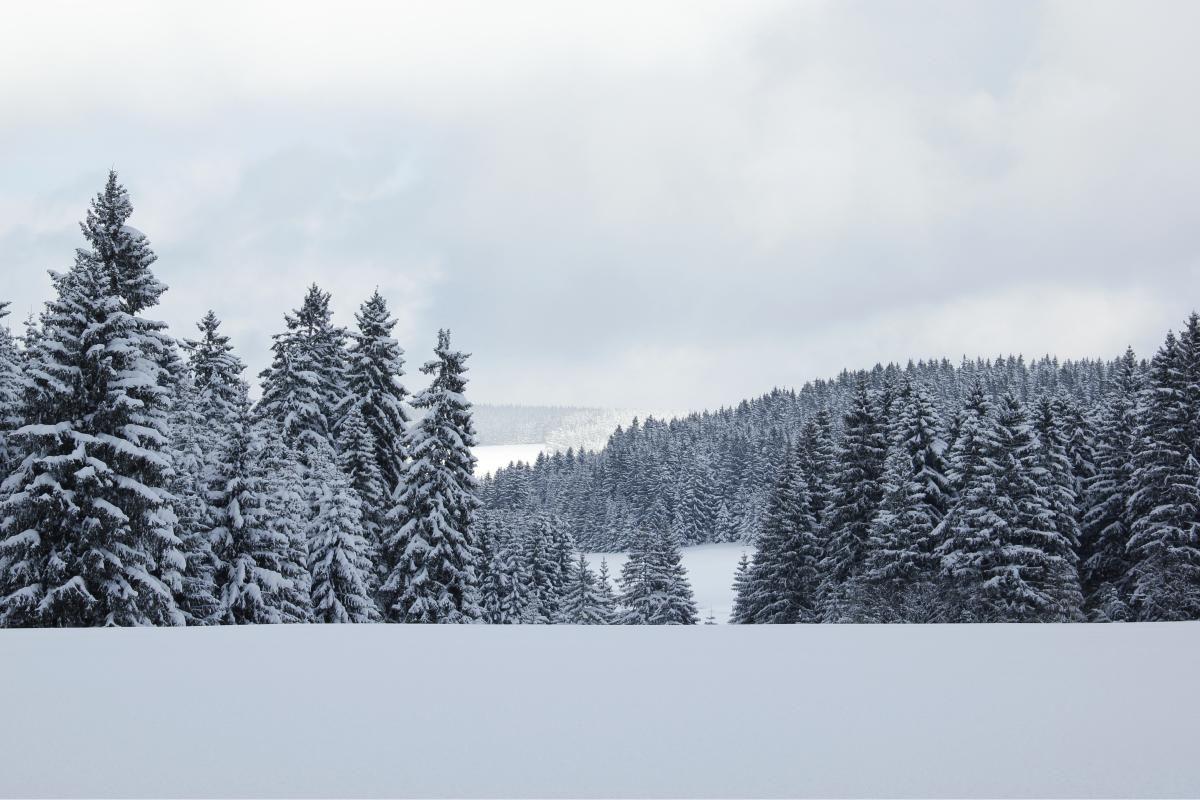 La Selva Negra -Schwarzwald  http://cronicasgermanicas.com/2016/02/08/descubriendo-alemania-selva-negra-schwarzwald/