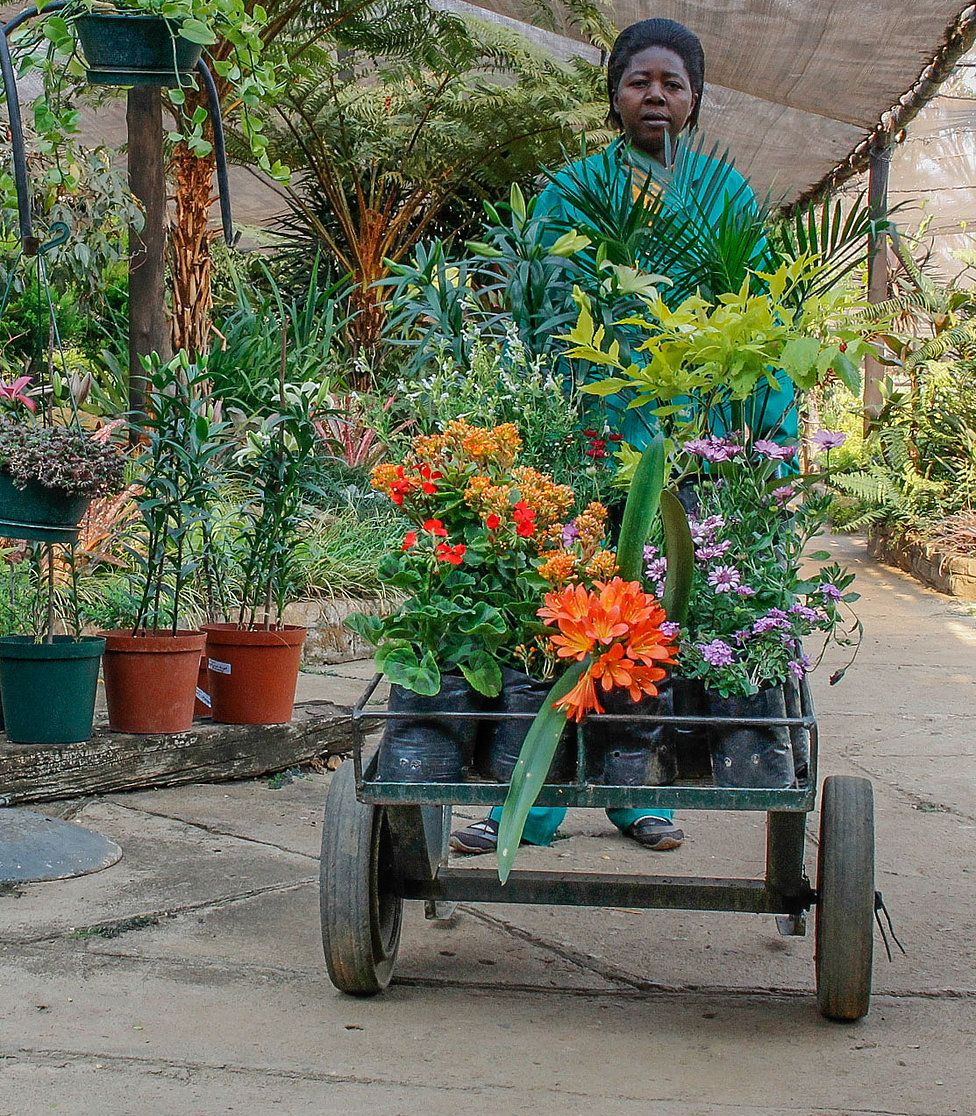 Plant Fruit Tree Nursery Zimbabwe