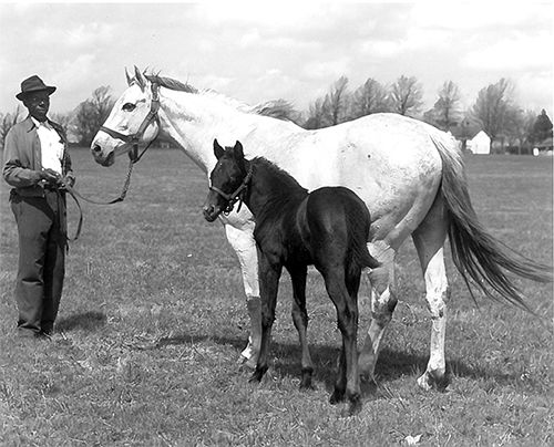 Geisha, dam of the great Native Dancer. A foal of 1943, she was by Discovery out of Miyako and bred and raced by Alfred G. Vanderbilt. Keeneland Library photo via the Maryland Thoroughbred.