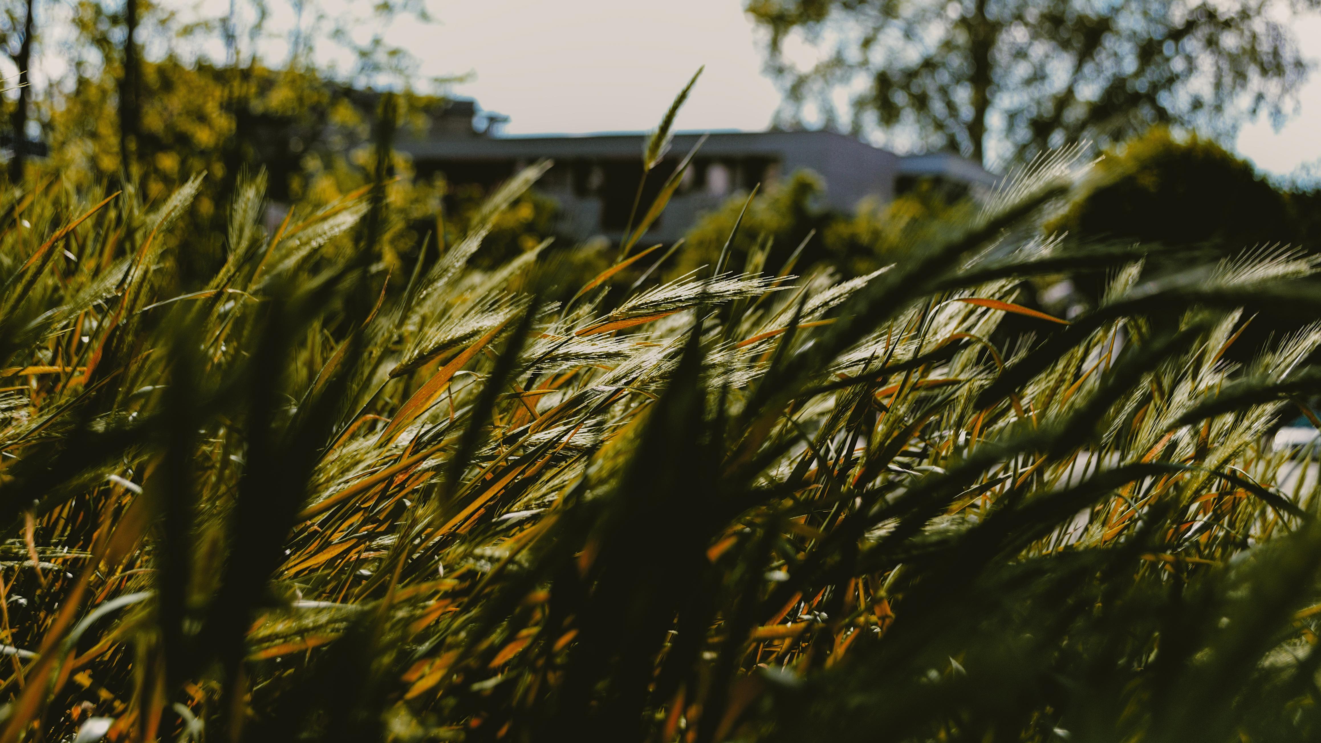 Grass OC[4634 2606][169] Heaven wallpaper, Grass