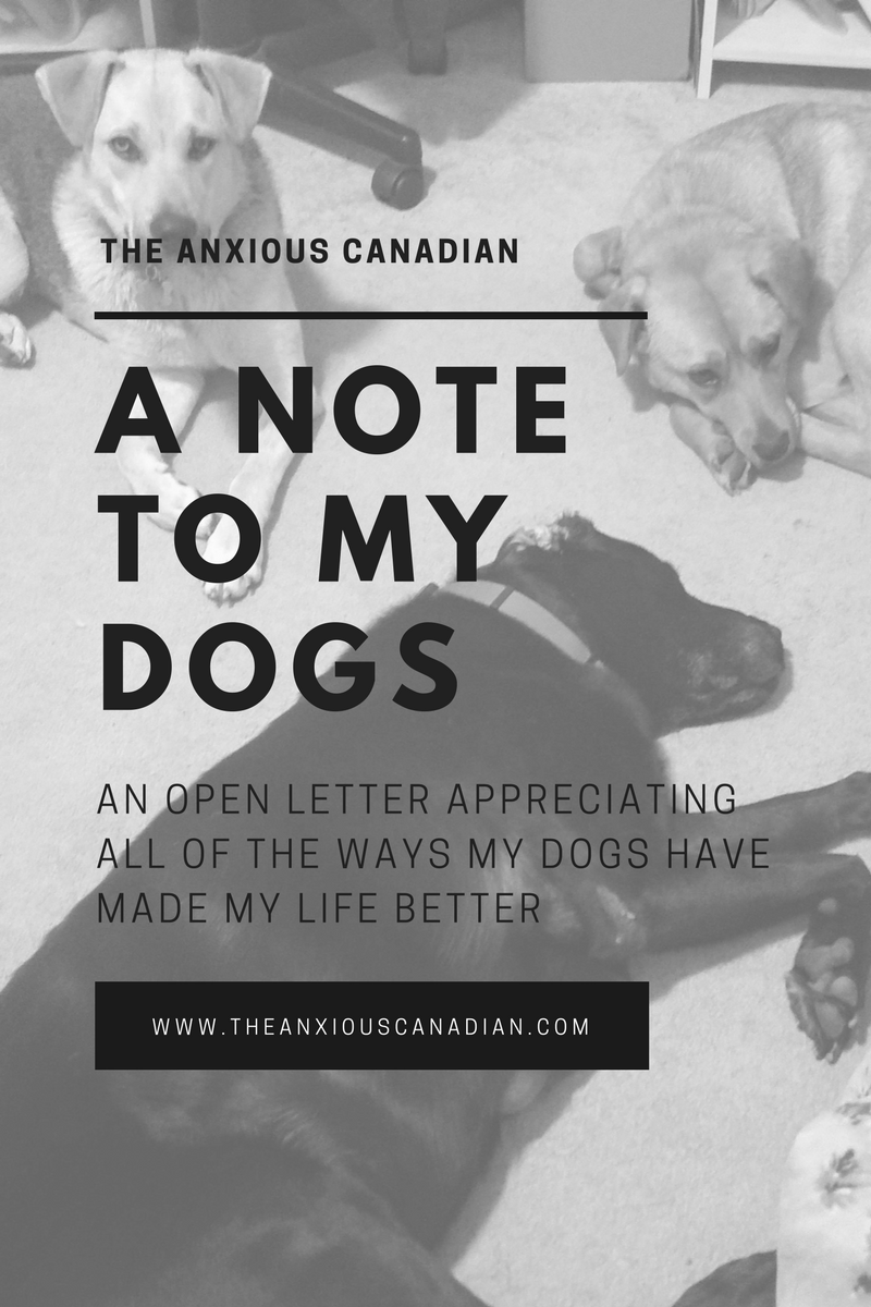 A Note To My Dogs An Open Letter Open Letter Lettering