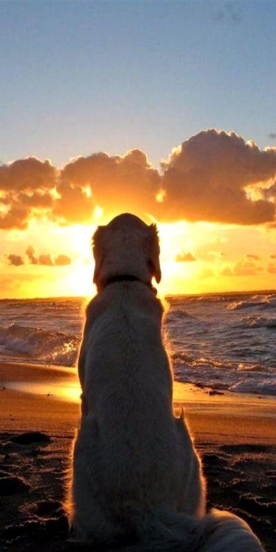 Madaket Beach Sunset On Nantucket Cape Cod Ma Dog Life Dog