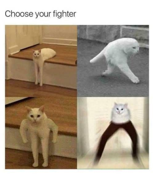 Cat Is An Animal That Can Deform Freely Hhhhhhhh Bellecool Cat Funny Relax Followusformore In 2020 Funny Animal Memes Funny Animals Funny Relatable Memes