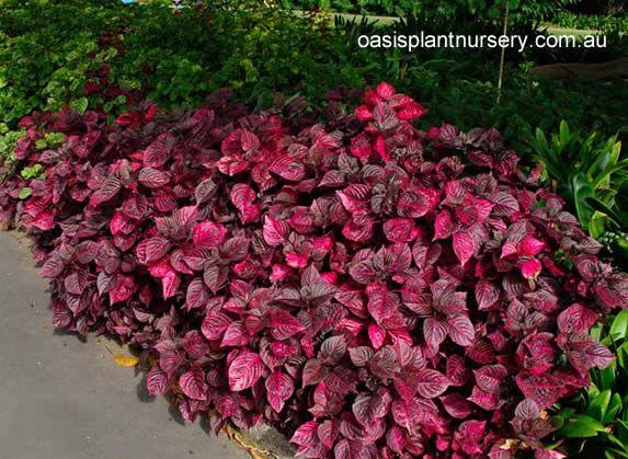Flowers that need full sun full sun plants ideas for for Small flowering shrubs for full sun