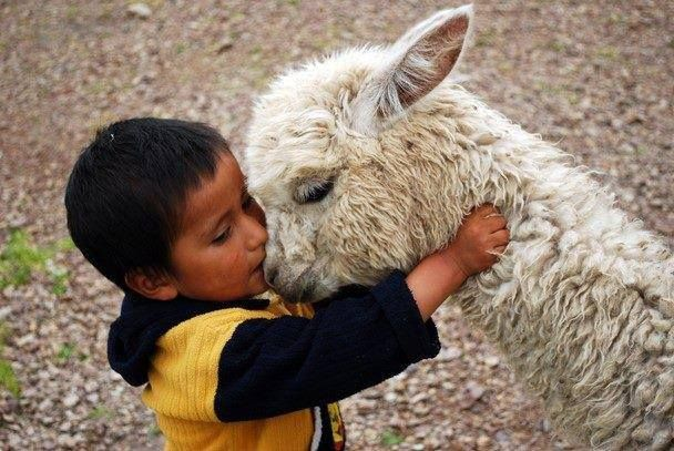 animals showing compassion - photo #1