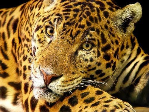 Tropical Rainforest Animals in Africa | Endangered Animals In The ...