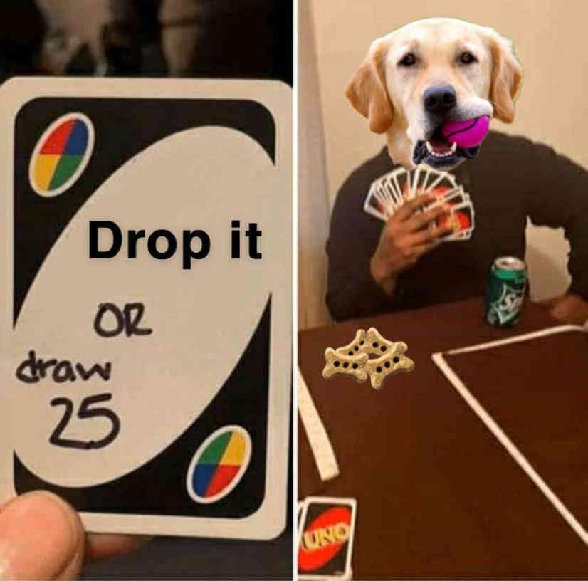 See 48 more joyful dog memes like this! #dogmemes #dogmeme #meme