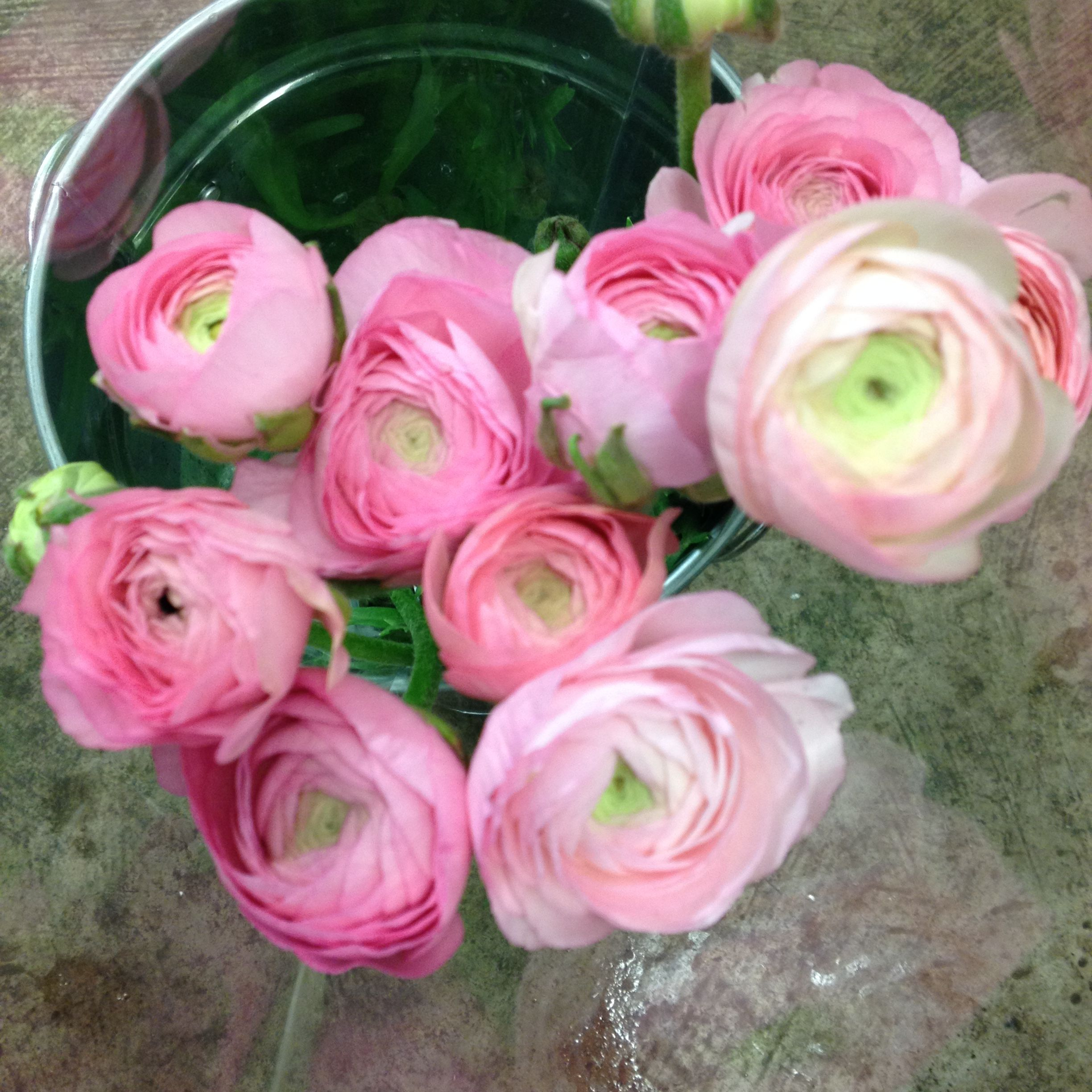 Ranunculus Just Love These Flowers This One Is Amandine Pastel Pink Sold In Bunches Of 20 Stems From Wholesale Fresh Flowers Flowers Diy Wedding Flowers