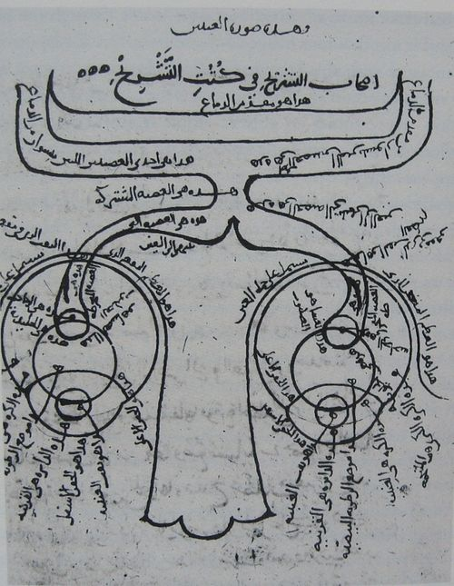 Diagram of the eyes and related nerves, manuscript