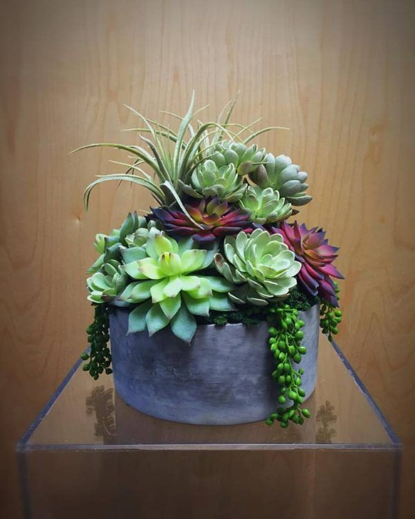 Learn About An Incredible New Company Thats Creating Succulent Arrangements For Wedding Rentals Phoenix Bride