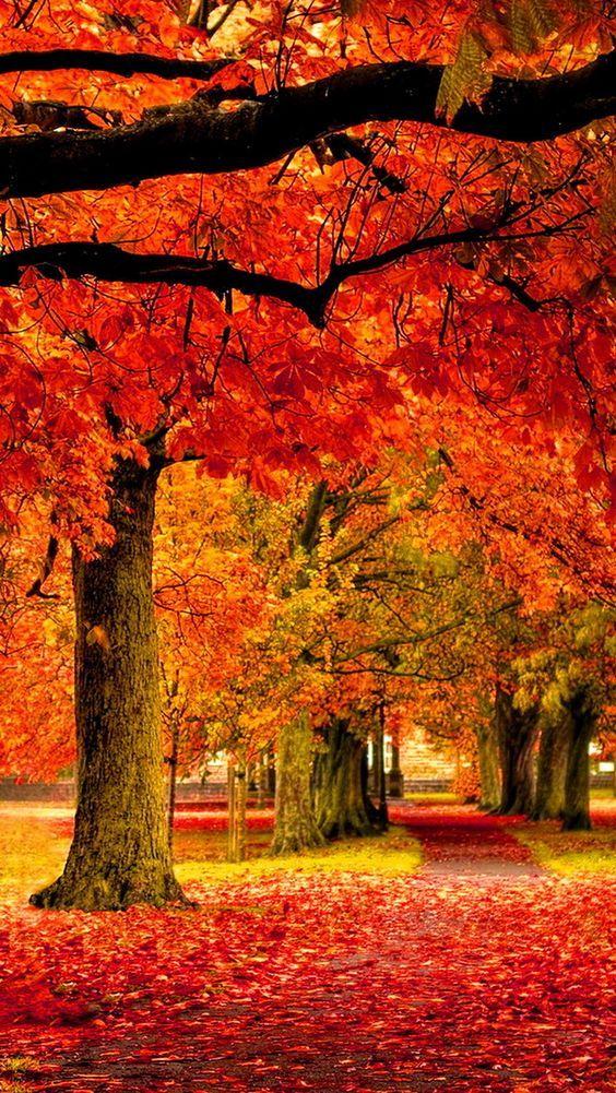 Autumn park  #autumnscenes