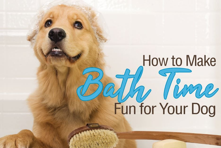 How To Get Your Dog To Love Bath Time Grooming Dog Obedience