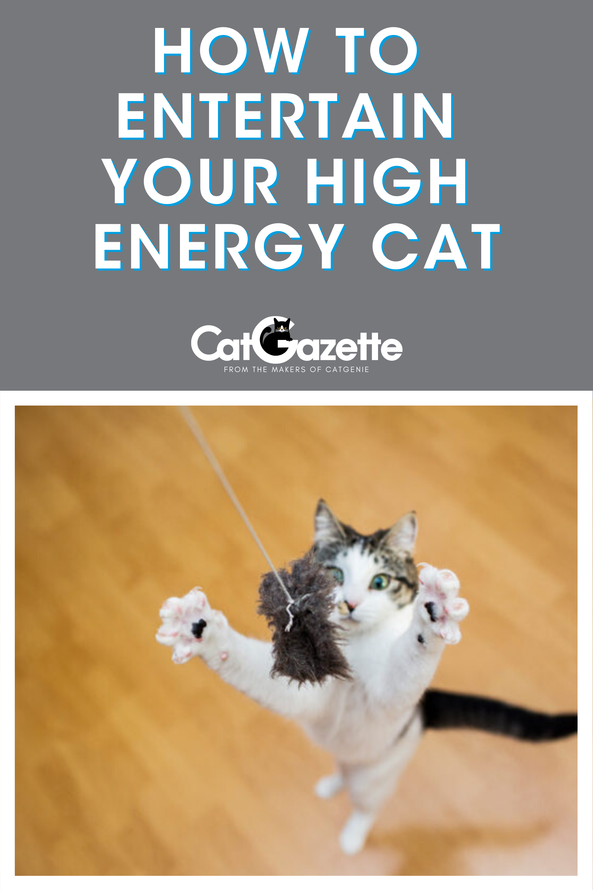 How To Entertain Your High Energy Cat In 2020 High Energy Cats Bengal Kitten