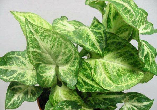 Zimmerpflanzen Dunkle Standorte zimmerpflanzen für dunkle standorte geeignet zimmerpflanzen