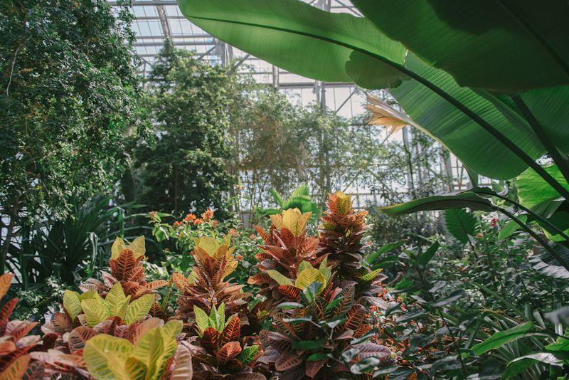 Meijer Gardens Butterfly House Grand Rapids