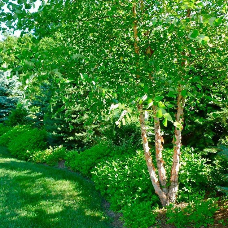 10 Fast-Growing Trees to Fill Out Your Landscape #schnellwachsendepflanzen 10 Fast-Growing Trees to Fill Out Your Landscape #schnellwachsendepflanzen