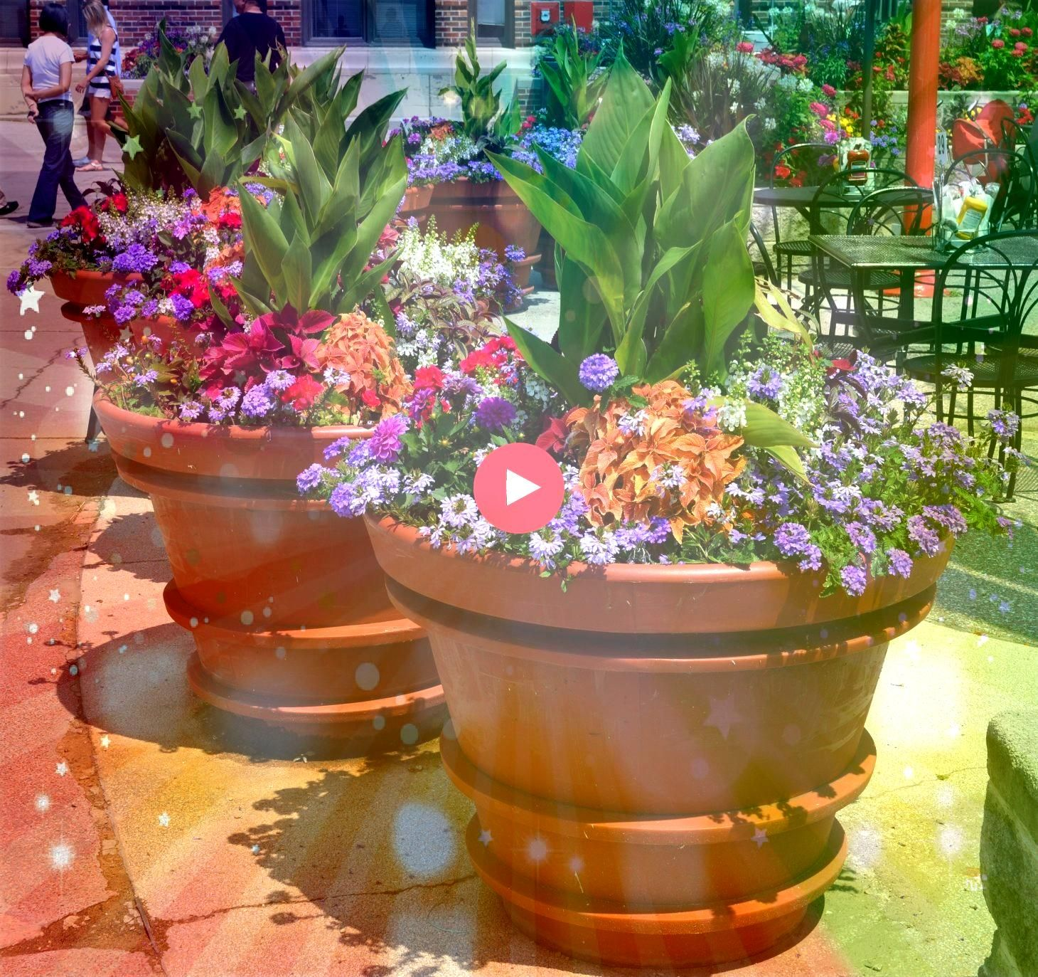 Gorgeous Full Sun Container Plants Ideas To Make Up Your Garden  DECORATHING25 Gorgeous Full Sun Container Plants Ideas To Make Up Your Garden  DECORATHING Instructions o...