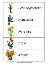Frühlingsblüher-Anlautschrift-Lösung.pdf #frühlingblumen