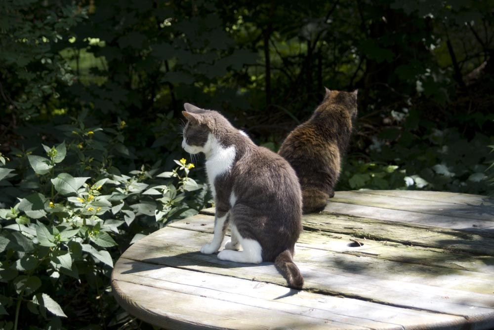 Cat In Backyard memories at the picnic table | well-placed fluff | pinterest