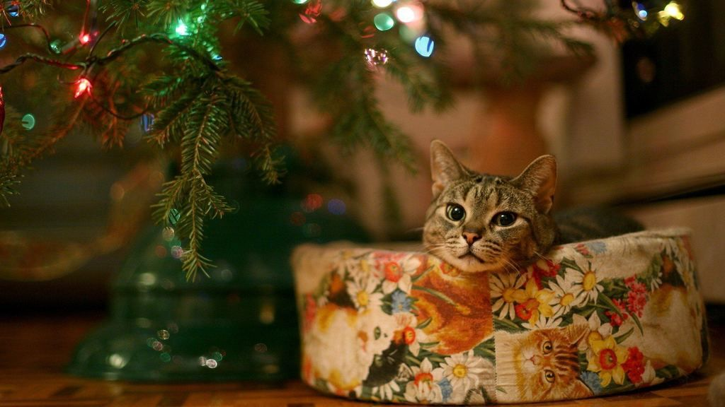 Cat Christmas Wallpaper With High Quality Update Christmas Cats Cat Christmas Tree Wallpaper Puppies Christmas hd wallpaper puppies kitten