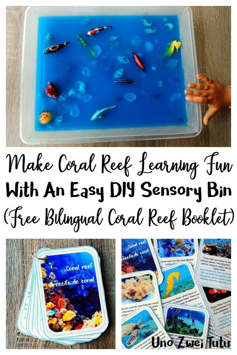 This fun coral reef sensory bin with a learning twist is perfect to teach young children about the ocean and how to take care of it. Includes free a printable booklet with real photos in Spanish, English and bilingual.
