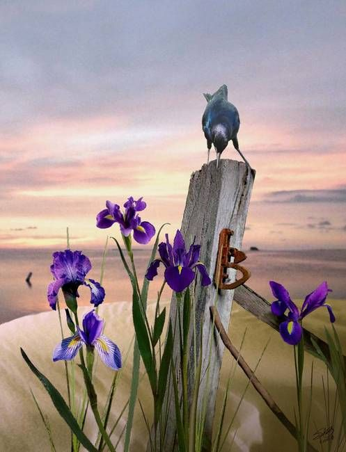 Fish Crow And Wild Irises By I M Spadecaller Iris Art Fine Art Prints Wild Iris