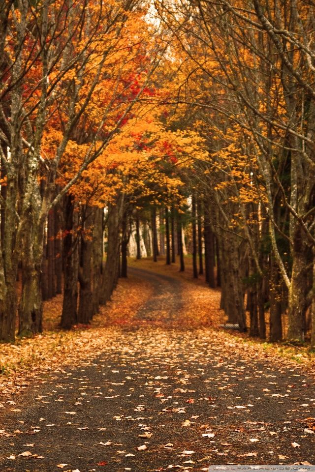 Ideas About Fall Wallpaper On Pinterest Wallpapers Iphone 640 960 Fall Wallpapers For Android 16 Wall Fall Wallpaper Fall Background Fall Backgrounds Iphone