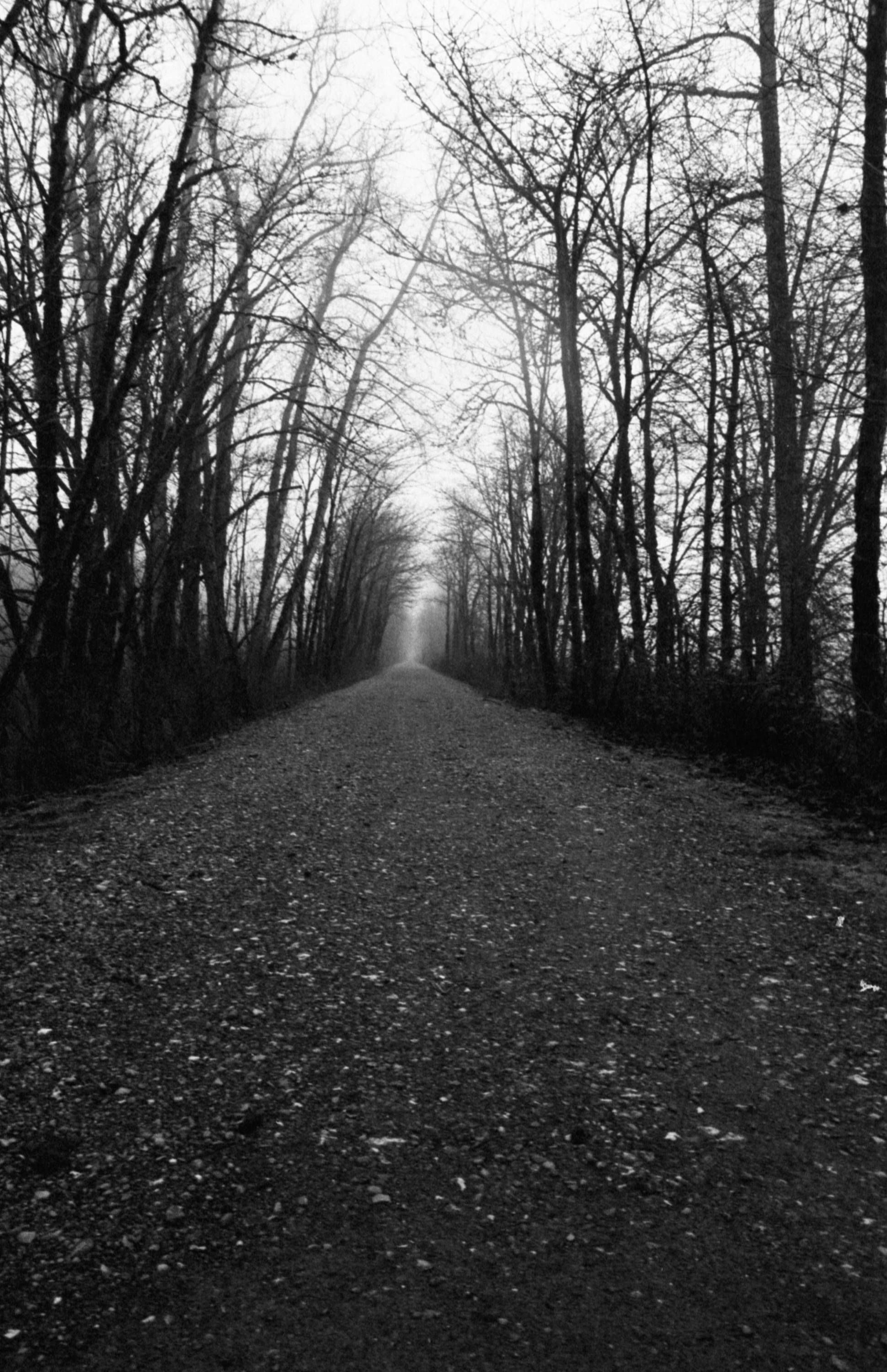 Black And White Photography Forest Photography Landscape Nature Print Fine Art Pho Black And White Landscape Forest Photography Black And White Photography