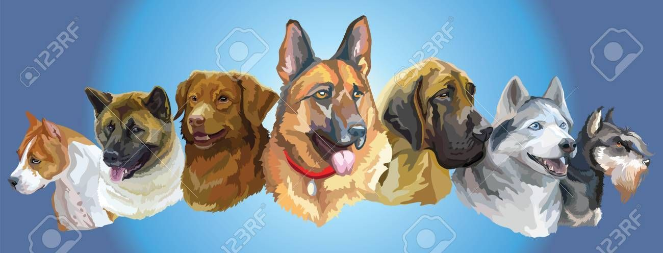 Set Of Colorful Vector Portraits Of Dog Breeds American