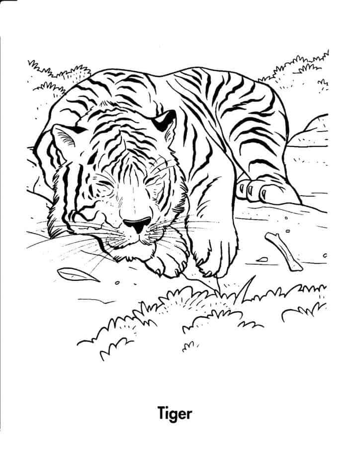 Free Tiger Coloring Pages For Adults From Tiger Coloring Pages