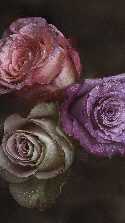 Blumen Hintergrundbilder Blumen Hintergrundbilder in