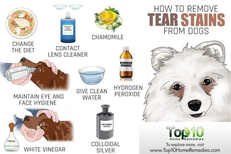 How To Remove Your Dog S Tear Stains Tear Stains
