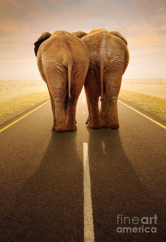 Elephant Poster featuring the photograph Going Away Together / Travelling By Road by Johan Swanepoel