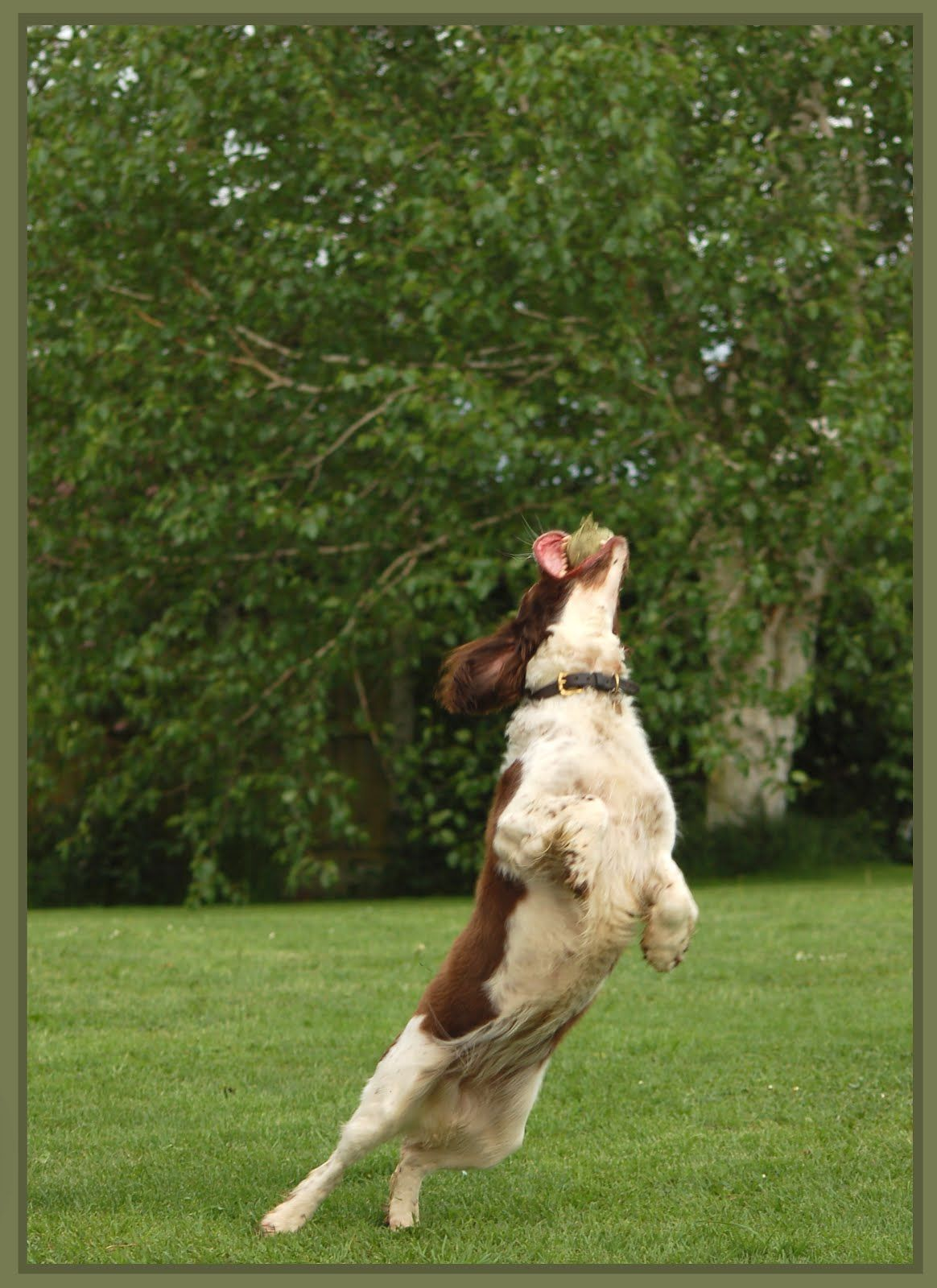how to stop dog barking at other dogs uk
