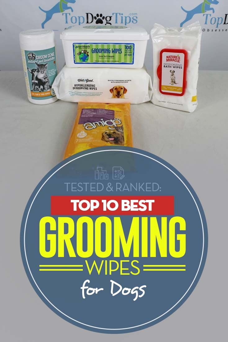 The 10 Best Dog Wipes for Light Grooming Dog grooming
