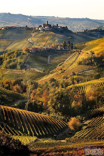 Vineyards in Tuscany, Italy, can you tell I want to go to Tuscany...just a little! One day