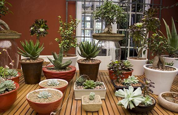 plantas de interior para decorar el hogar
