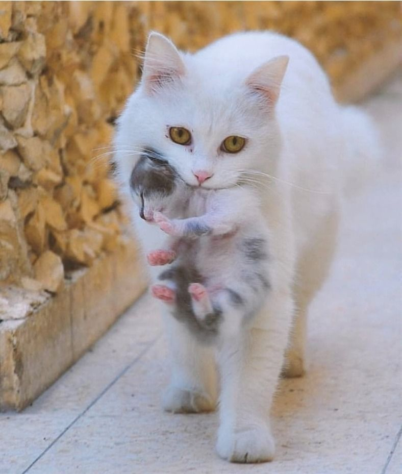 Cutecatzone Come One Let S Go Home My Little Kitten Cute Animals Cute Little Animals Cats And Kittens